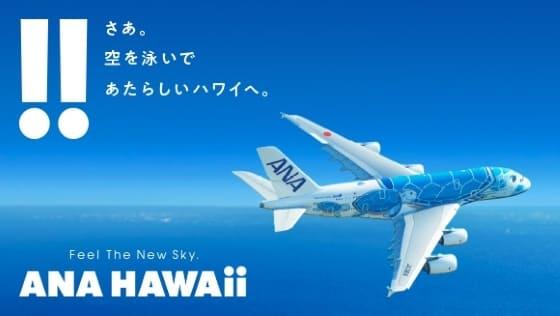 「ii」と「!!」にこだわる「空飛ぶウミガメ」